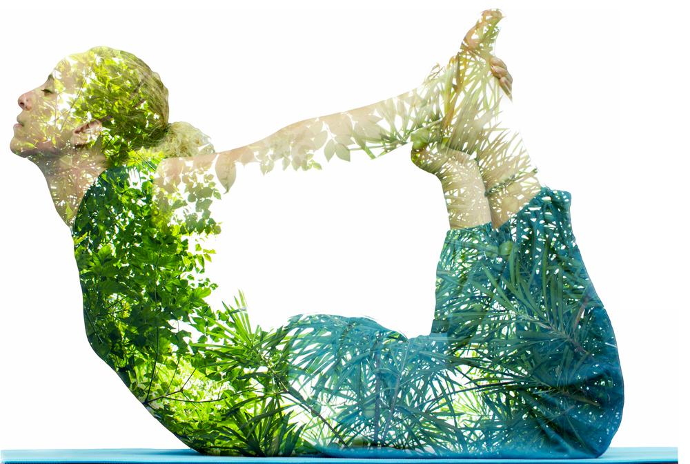 macaw_bank_yoga