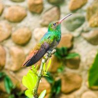 Bird_of_Belize